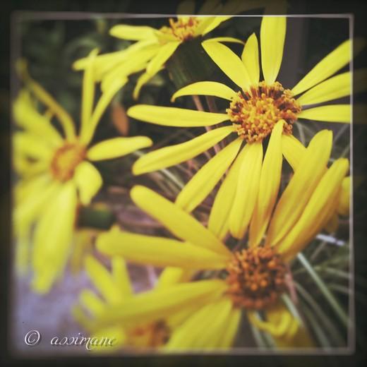 Fotor_144636650801460.jpg