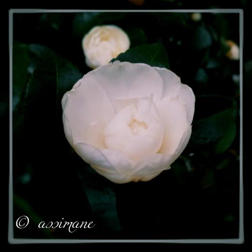 Fotor_144750245130766.jpg