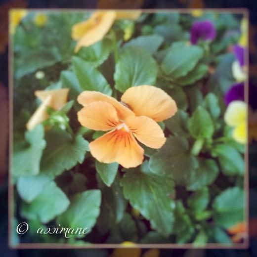 Fotor_144636855049380.jpg